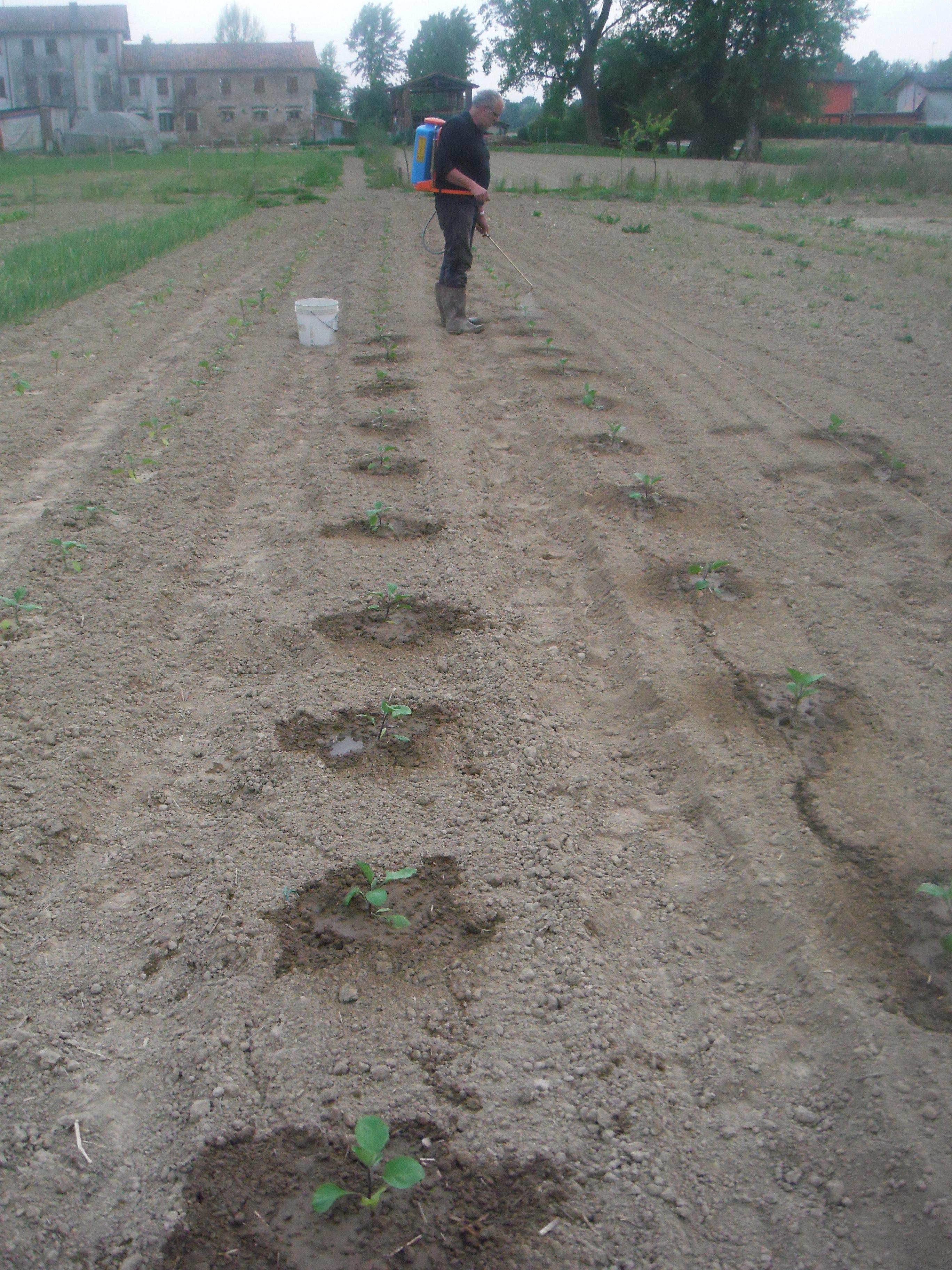 Soc agricola donna gnora galleria soc agricola donna gnora for Semina arachidi